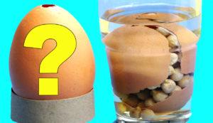 Experimentos caseros con huevos